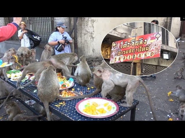 Monkeys Eat Cakes And Candy At 'Birthday Party'