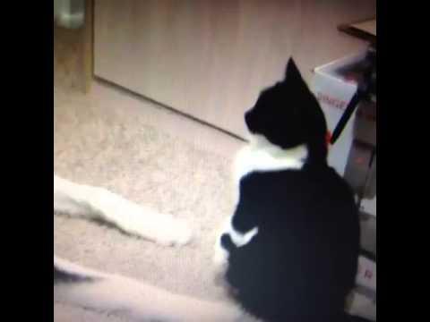 Cat Slaps Dog Overvoice [VINE]