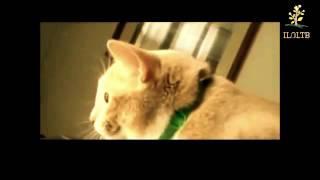 """Копия видео """"Кошки разговаривают  Забавные кошки  Кошки мяукают  Приколы с кошками"""""""