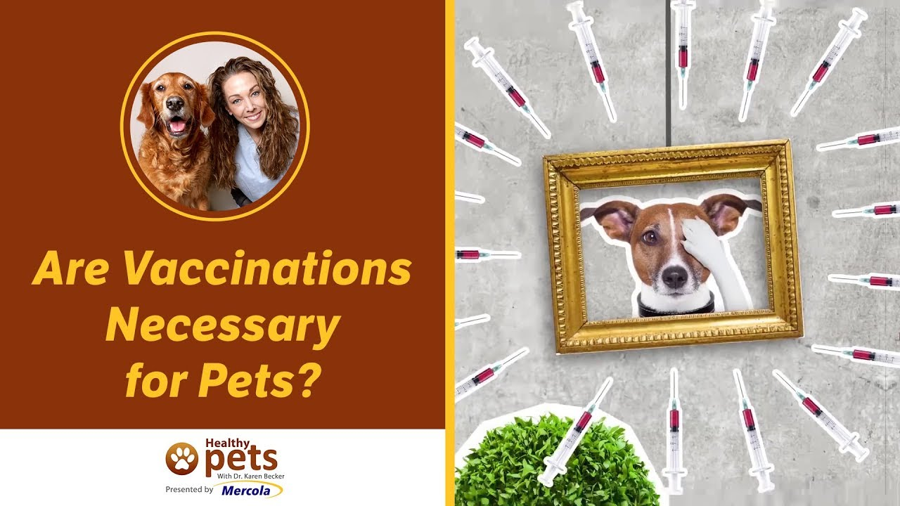 Dr. Becker: Are Vaccinations Necessary for Pets?