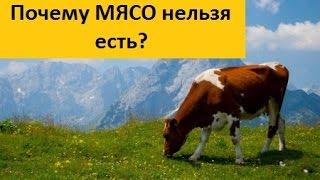 Узаконенное убийство животных или почему нельзя есть мясо? Марва Оганян