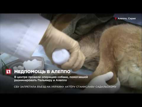 В сирийском городе открылся медицинский центр Минобороны России