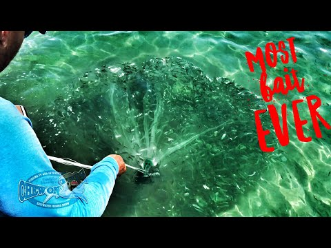 Cast Netting Fishing Most Bait Fish Ever Caught In Florida