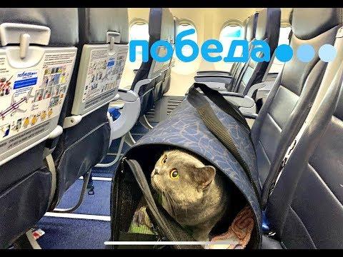 Полёт с КОШКОЙ на Победе в Москву