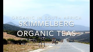Skimmelberg Organic Teas - All about Buchu and Rooibos
