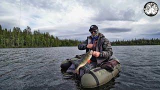 Рыбалка в Карелии 3 часть Трофейный окунь Дикие