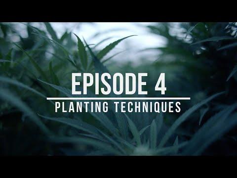 Growing Hemp: Best Practices for Success – Episode 4: Planting Techniques