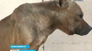 Бойцовская собака держала в страхе несколько улиц