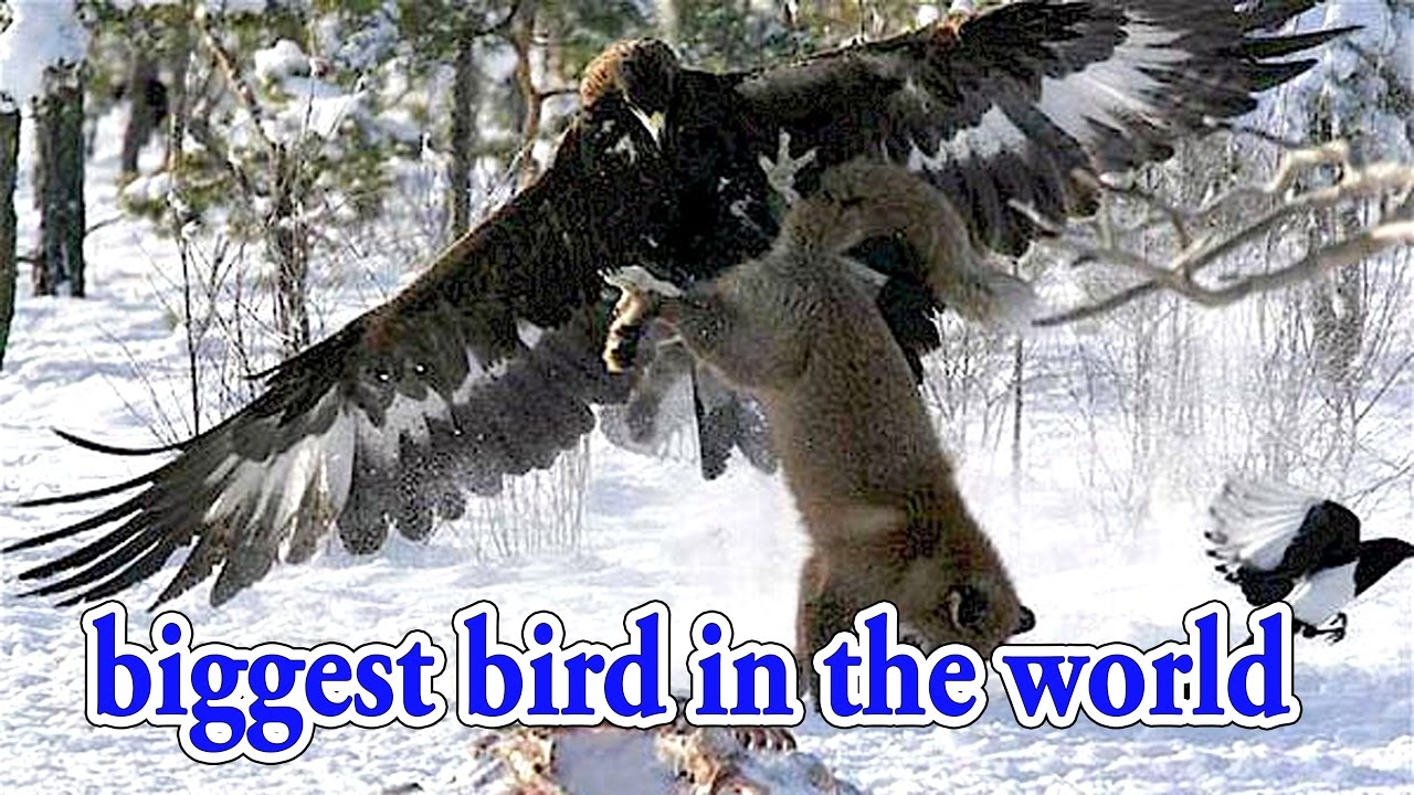 large birds Top 10 biggest bird in the world documentary ... Biggest Bird In The World Alive