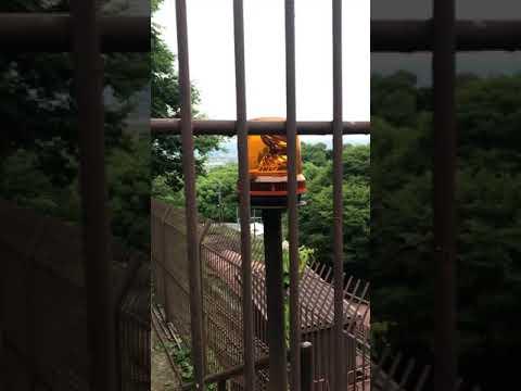 Video from my phone (Nanzenji Kyoto)