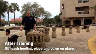 Pit Bull Obedience Training Charleston Sc, Savannah Ga, Bluffton Sc