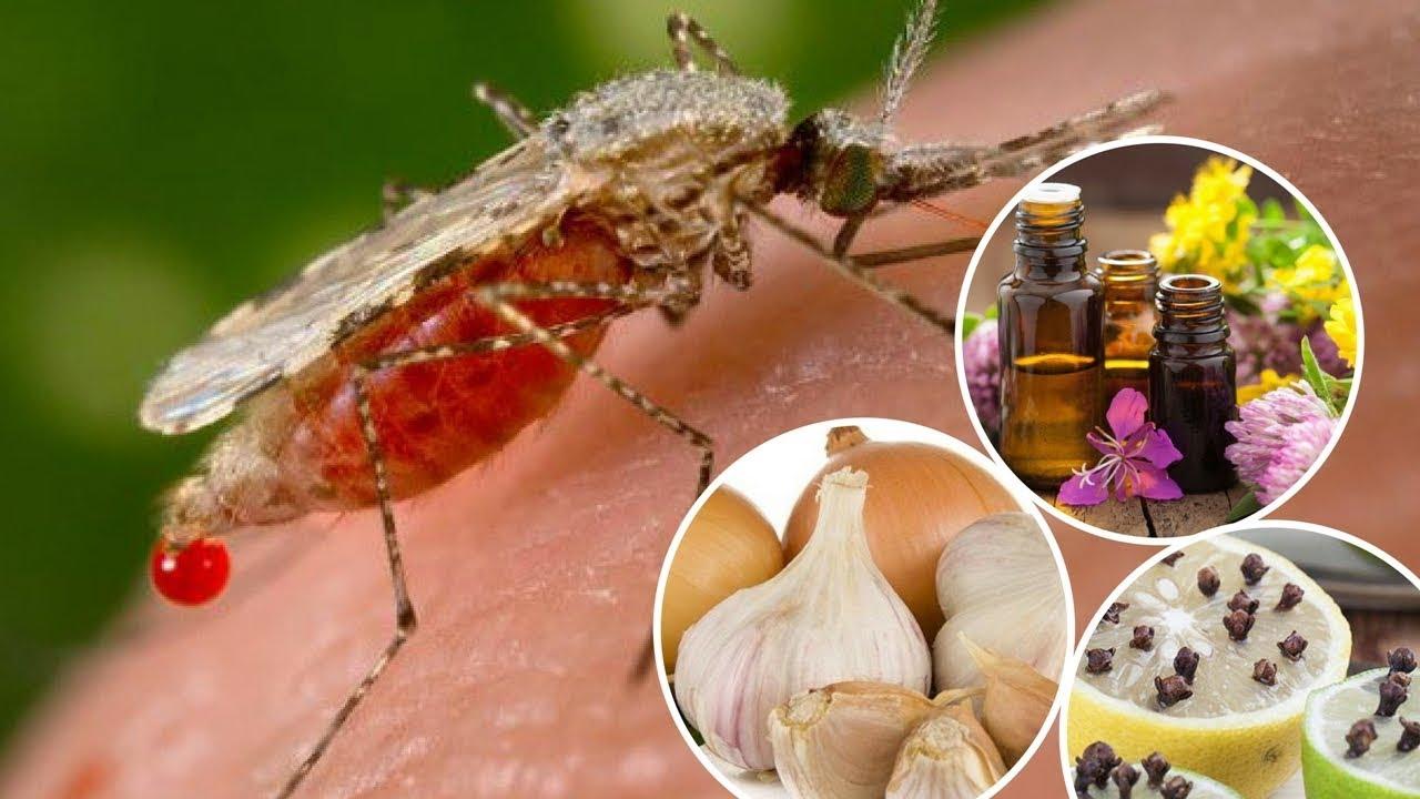 Sivrisineklerden Nasıl Kurtulunur