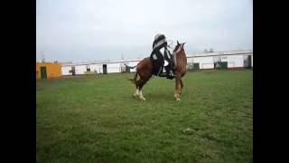 Маринера. Национальный танец Перу. Лошадь и партнер.