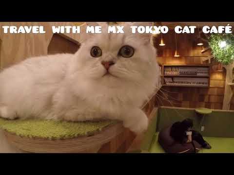 Travel with me MX - Akihabara, Tokyo Cat Café