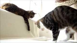 猫パンチ炸裂!超リアルな虫ロボットに挑む猫たち