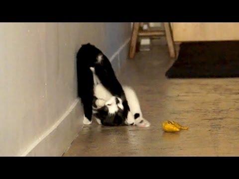 Kodi's Somersault Skills!
