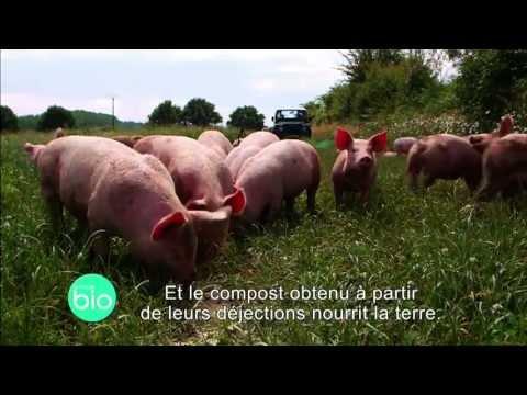 A la découverte d'un élevage de porcs biologiques