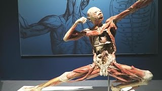 Liberty Science Center After Dark. Bodies Exhibit Special!
