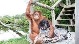 Странная дружба животных National Geographic