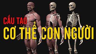 Bên trong cơ thể bạn có gì? - Cấu tạo cơ thể người. - YouTube