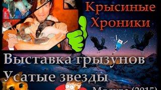 Крысы | Выставка грызунов ''Усатые звёзды'' (Москва 05.12.15)