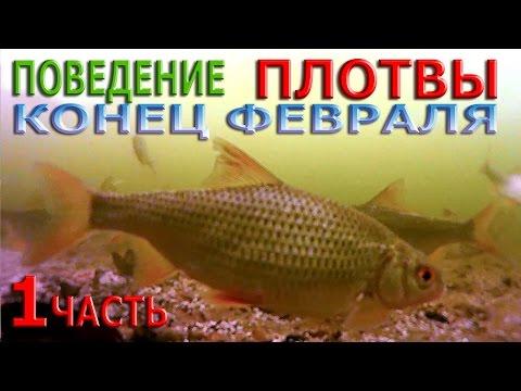 зимняя рыбалка на плотву - 2017-03-13 10:00:12