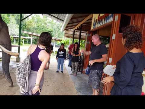 Thai elephant attack –  Koh Samui Thailand
