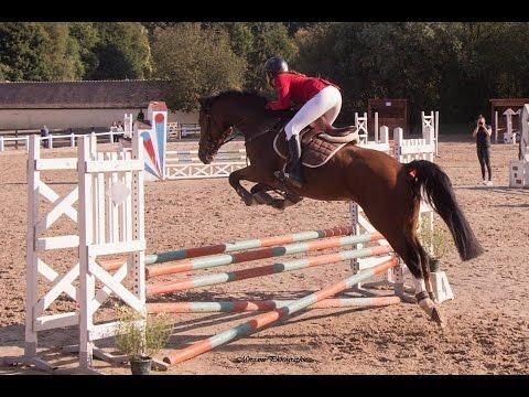 Une journée avec nous   Concours et sortie de chevaux ❤️