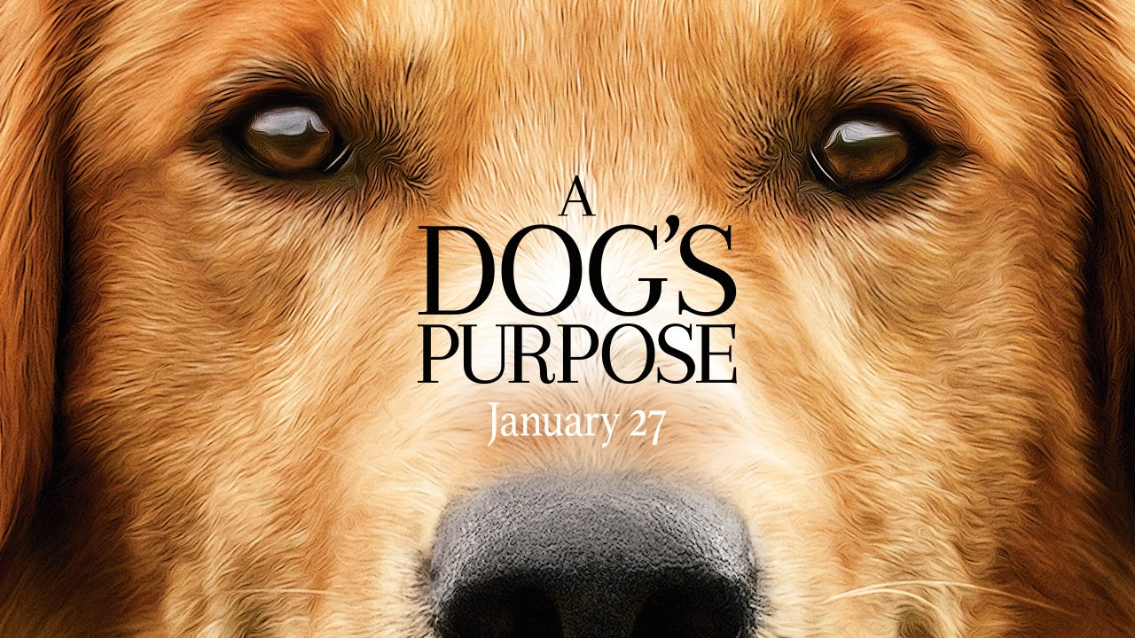 Un vídeo denuncia maltrato animal en el rodaje A Dogs Purpose