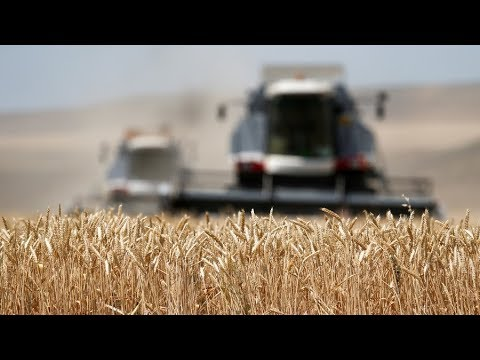 Russia The Last Hope For Boers? Farmers Fleeing South Africa For Fertile Fields Of South Russia