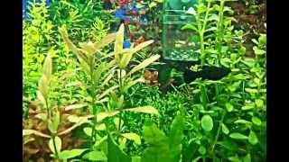 mein 125l aquarium 3