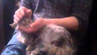 Кошка балдеет от ласки