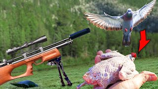 Air Rifle Pigeon Hunt Catch, Clean, and Cook