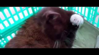 Meine Katze Cookie kann wieder spielen