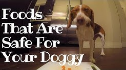 What Foods are Safe for Your Beagle