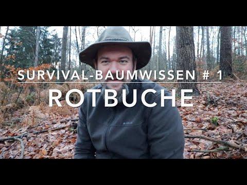 Survival-Baumwissen # 1 - Rotbuche