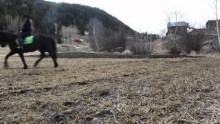Dressur- Stjerna Thumbnail