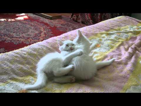 Прикол на телефон говорящий рыжий кот видео WikiBitme