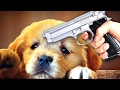 click 2 save the puppies