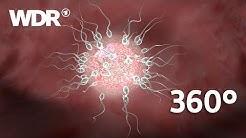 360° Video: Die Befruchtung - Spermium trifft Eizelle | WDR