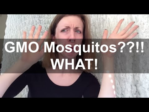 GMO Mosquitoes!! WHAT?!?