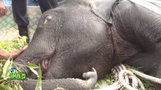 Baby elephant seriously injured after being hit by train