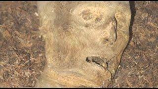 mummies van Wieuwerd