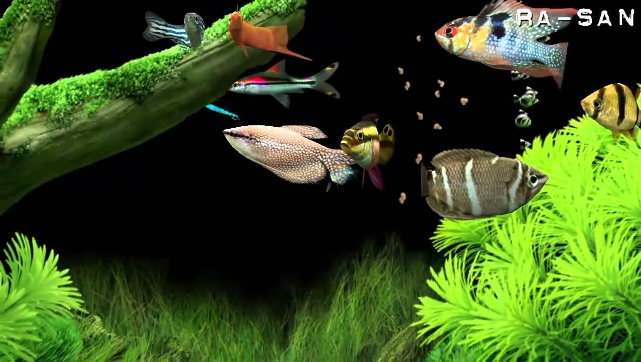Dream Aquarium screensaver [HD] - YouTube