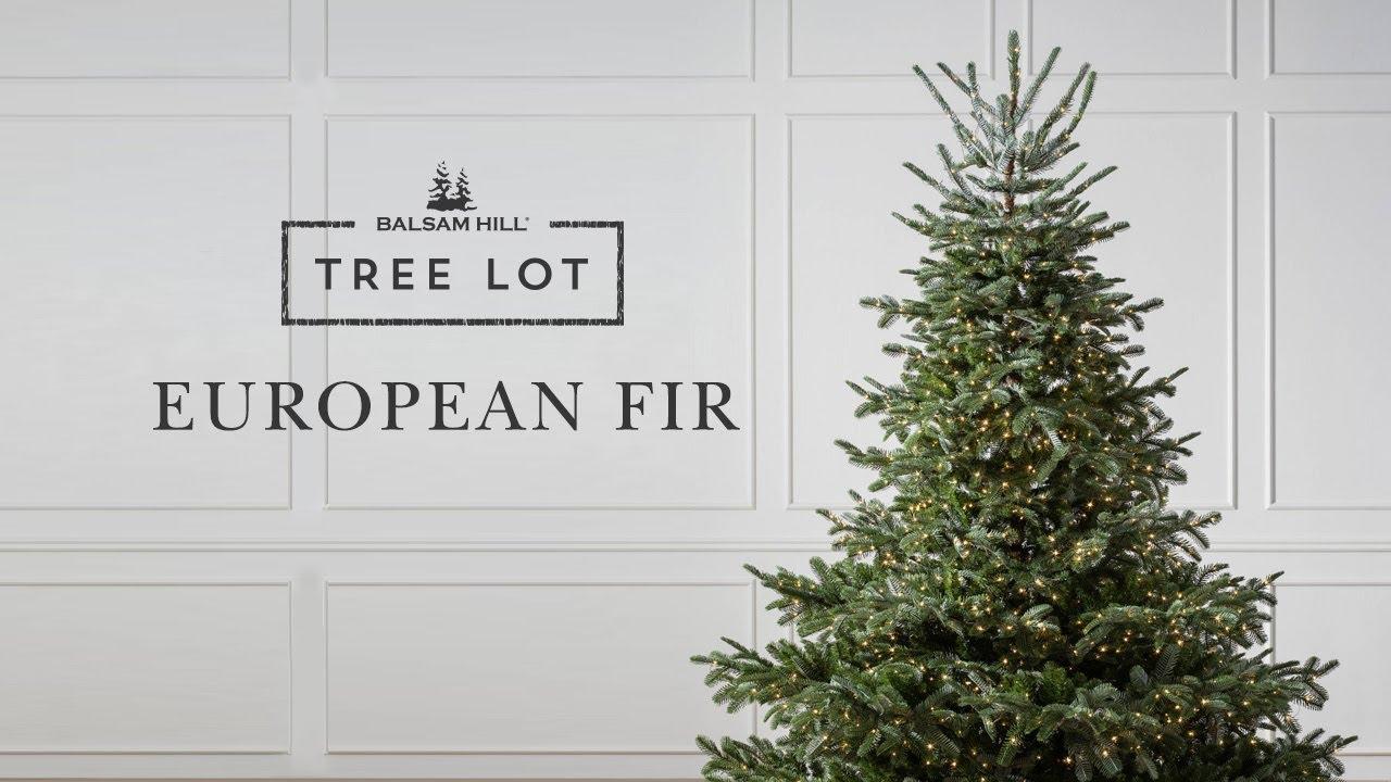 European Fir | Tree Lot - YouTube