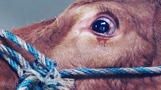 Убийства Свещенных Животных с глумлением над ними.