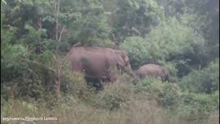 Mother and her baby elephant eating inside the forest