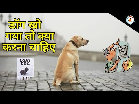 How To Report A Stolen Dog / डॉग खो गया तो क्या करना चाहिए / How To Find Lost Dog
