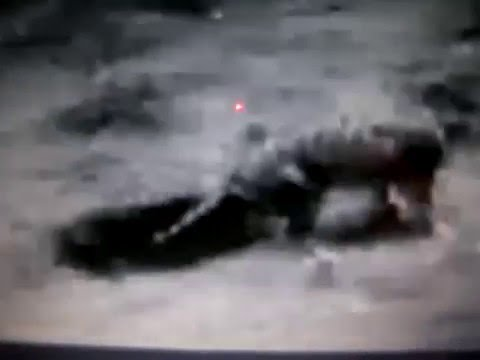 Tiger vs Black Panther very rare footage