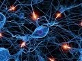 Anatomy and Physiology of Nervous System Part I Neurons